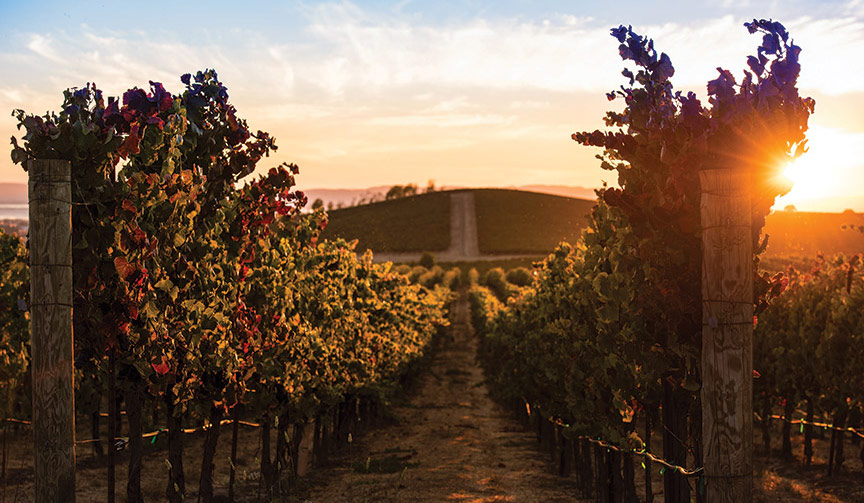 photo_our_story_vineyards_1
